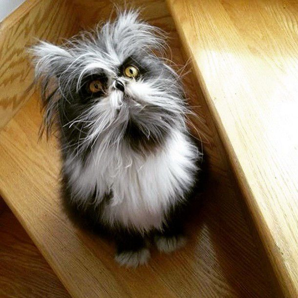 Atchoum the cat.  He is the only cat in the world with a rare disorder called Werewolf Syndrome.