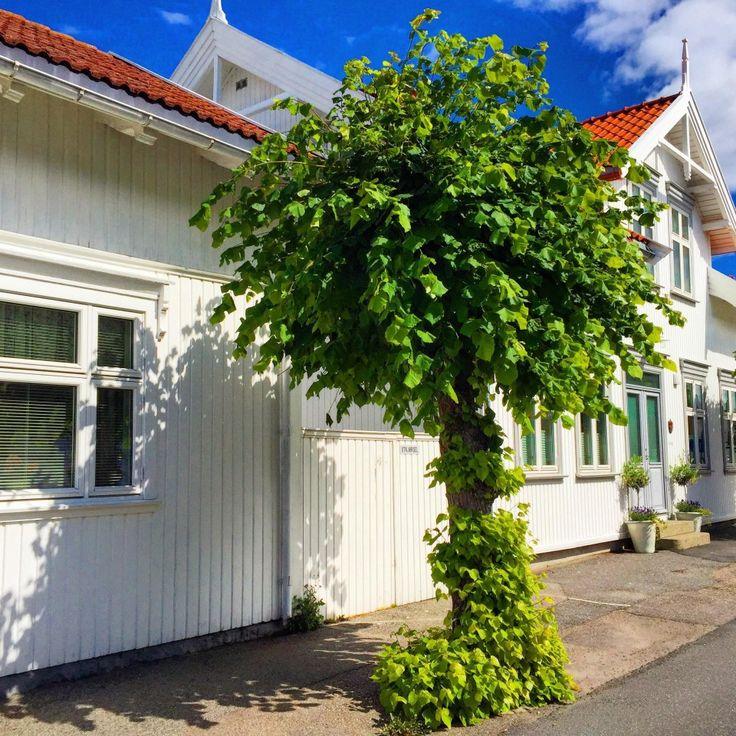 norwegian palm tree, the stavern version :)