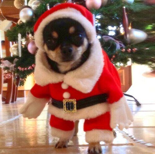 Lillypet Pet Christmas Costumes Dog Suit Pet Costumes Dog