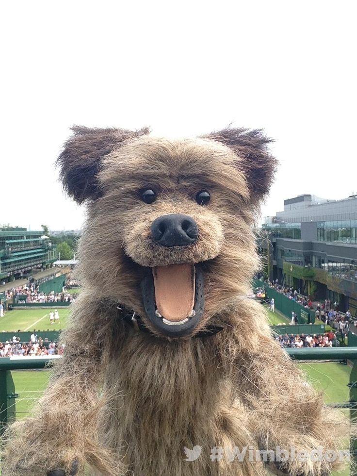 #tennispets! RT @Wimbledon: Hacker T Dog from CBBC here looking for Sue Barker at #Wimbledon