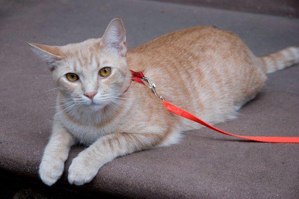 """Aan de overlast van loslopende katten komtmogelijk al per 1 juli een einde. De Europese Unie werkt aan een nieuw wetsvoorstel, waardoor katten alleen nog aangelijnd naar buiten mogen. Kattenhater FonsWagenmeester is blij met de nieuwe regel: """"Hier in de buurt is het verschrikkelijk. Soms lopen er wel vier katten tegelijk op straat"""", zegt hijverontwaardigd. """"Twee huizen verderop woont een [...]"""