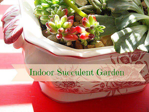 how to make a indoor succulent dish garden {ACultivatedNest.Com}