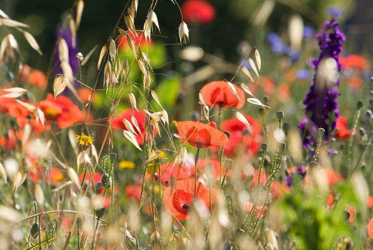 Nature is in the air   Nature et Découvertes