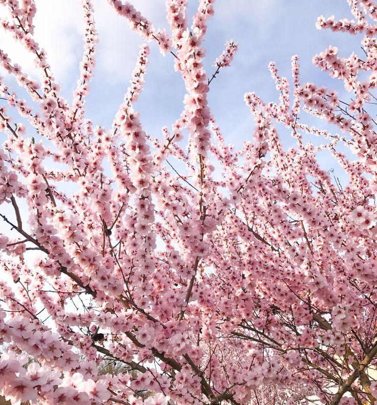 spring-flowers-frühjahr