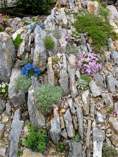 17 Best Images About Rock/Alpine Gardens On Pinterest