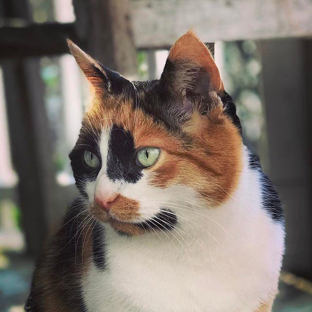 Eine Rose Hat Dornen Eine Katze Krallen Beide Sind Das Risiko Wert Unbekannt Und Wie Animals Instagram Posts Cats
