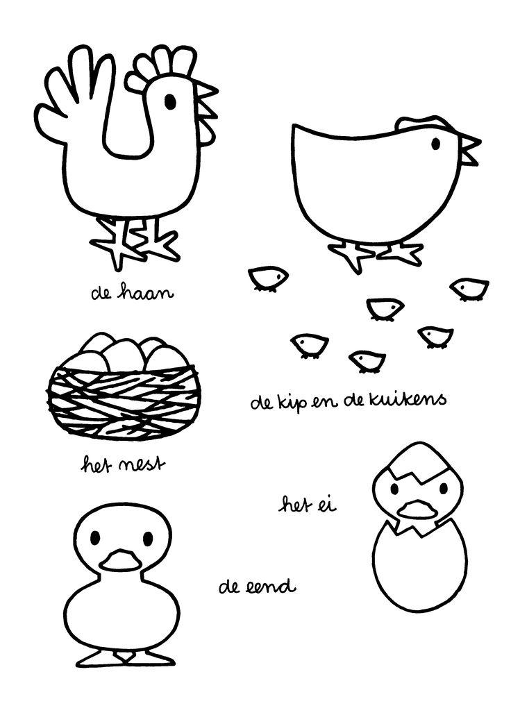 De haan. De kip en de kuikens. Het nest. Het ei. De eend