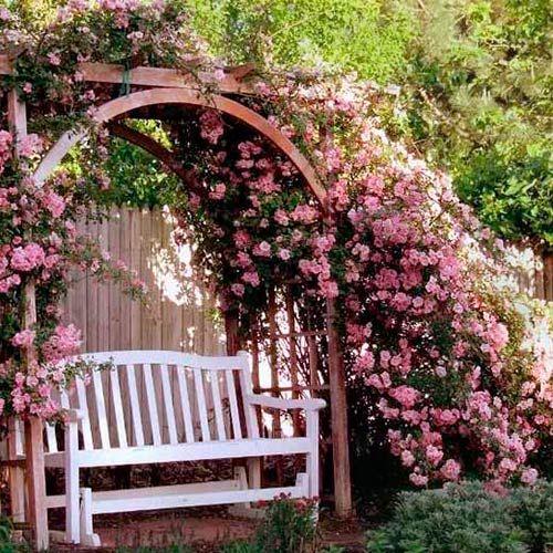 Старые английские розы: Red Roses Jo Malone — Beauty-maniac: блог о красоте