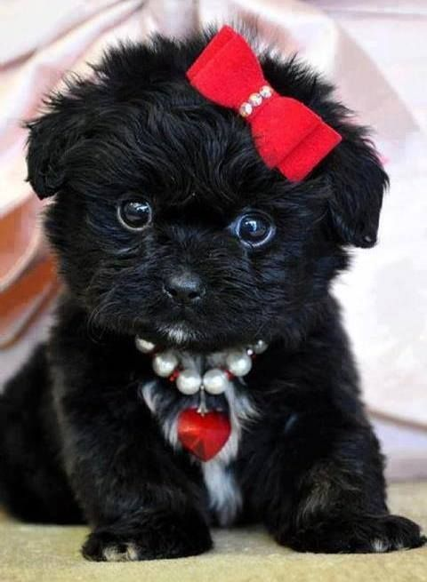 This little doggy is all dressed up! #cute #puppy
