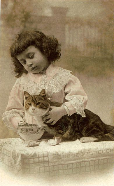 Cats - For PERSONAL use only by fidgetrainbowtree, via Flickr