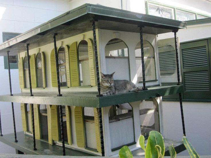Cute Cat Houses Catcondo