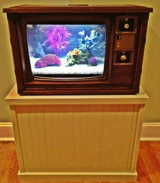 Top 40 Ideas About Cool Fish Tanks On Pinterest Aqua