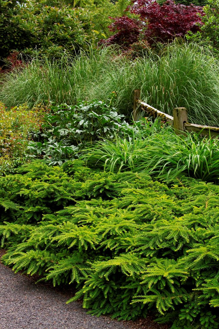 79 best woodland shade garden images on pinterest plants for Large bushes for landscaping