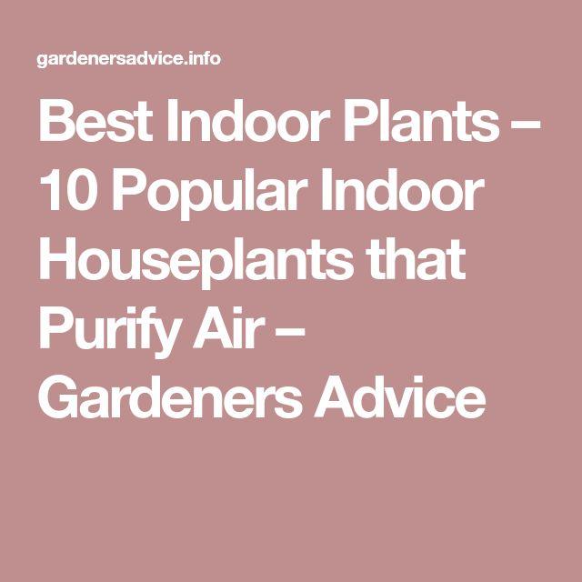 Best Indoor Plants – 10 Popular Indoor Houseplants that Purify Air – Gardeners Advice