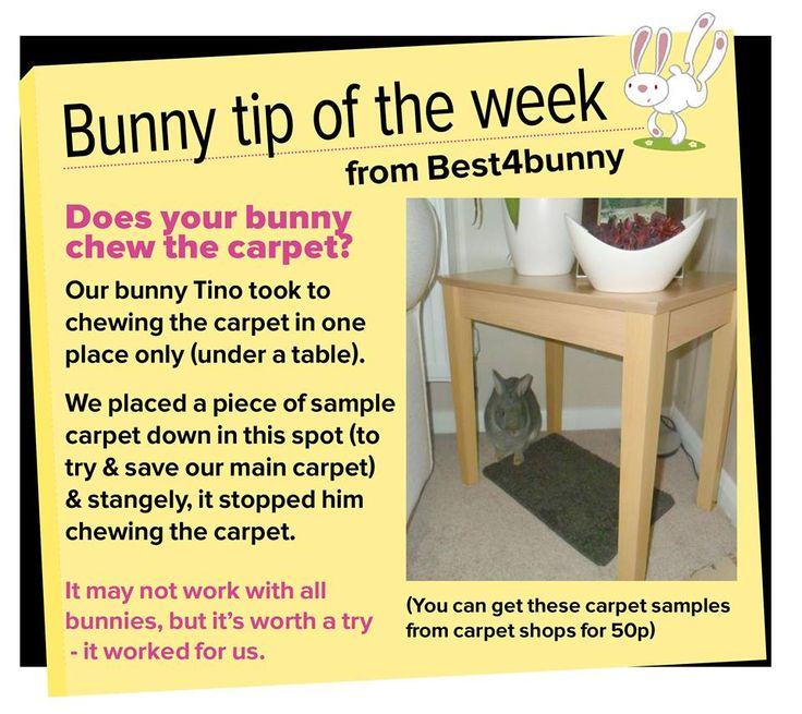 Bunny tip week 39 This tip may help your bunny to stop chewing at the carpet!