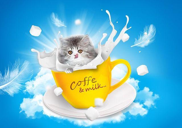 Gato, Leite, Xícara De Chá, Persa, Língua, Açúcar, Céu