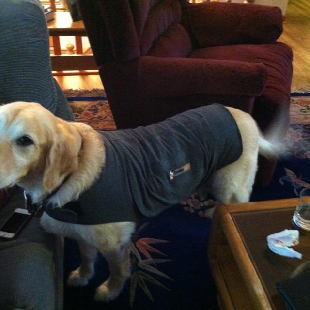 New Thundershirt: Thundershirt Owners, Fur Babies