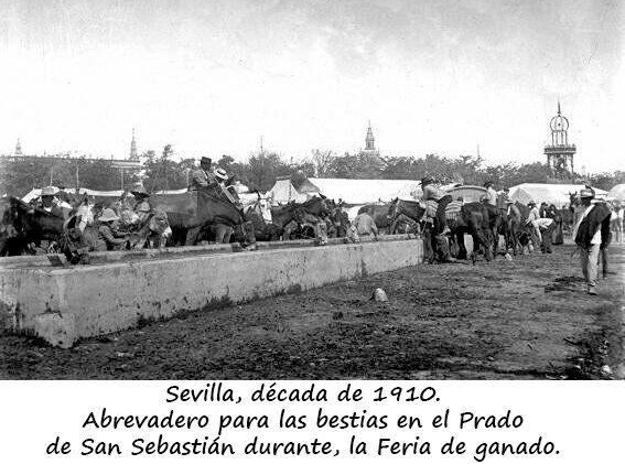 Sevilla: Abrevadero en el Prado de San Sebastián durante la Feria de ganado (1910)