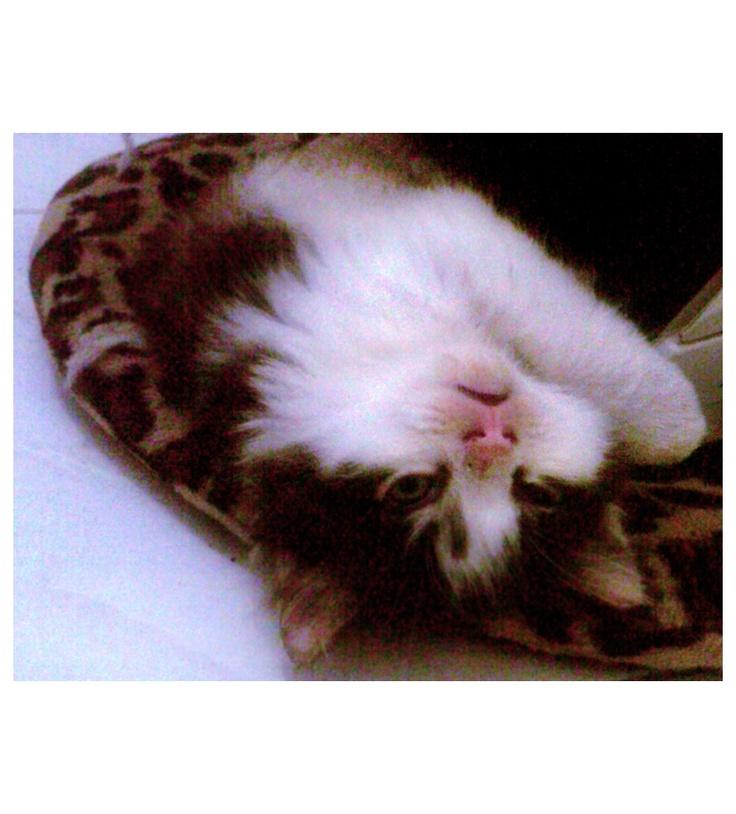 sleepy face cat :3