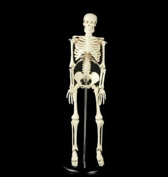 tiny tim my first full skeleton halloween prop - Halloween Skeletons
