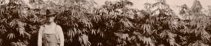 Through the Years 1606: French Botanist Louis Hebert planted the first hemp crop in North America in Port Royal, Acadia (present-day Nova Scotia). 1770s: In Virginia (and some other colonies), farmers are required by law to grow hemp. 1776: The U.S. Declaration of Independence is drafted on hemp paper. 1797: The U.S.S. Constitution is outfitted …