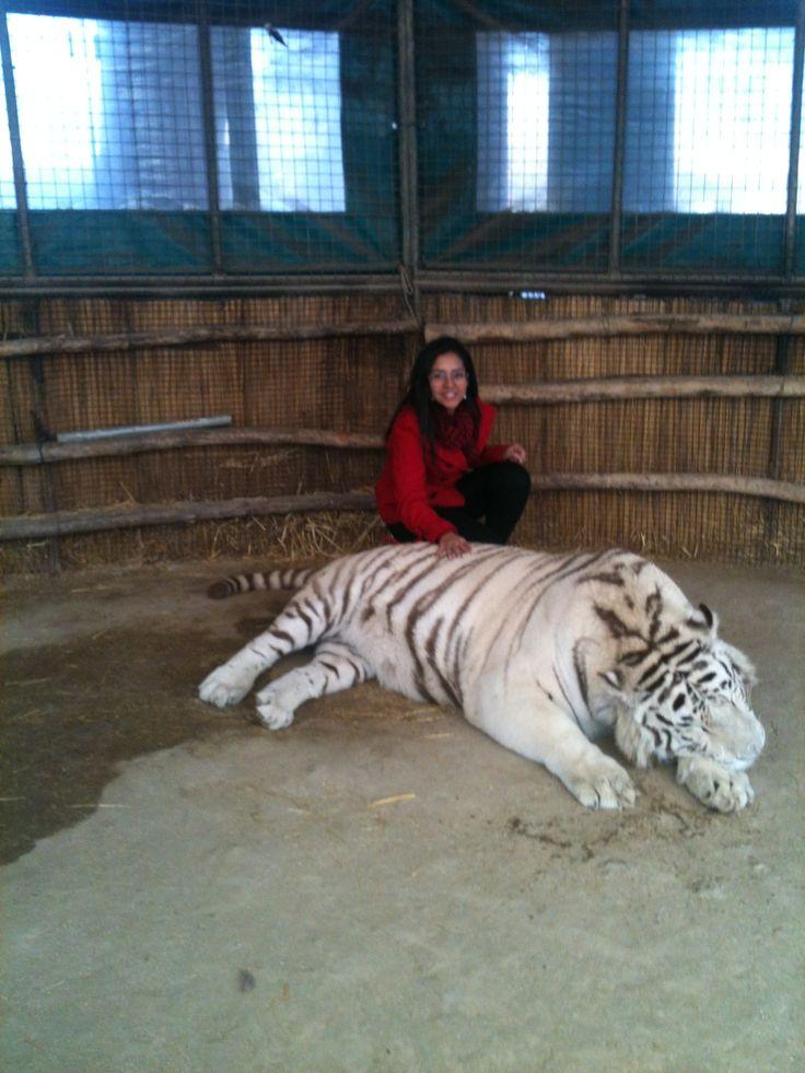 Zoo de Lujan.