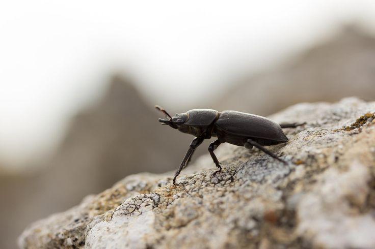 Bug by Bruno Skvorc on 500px