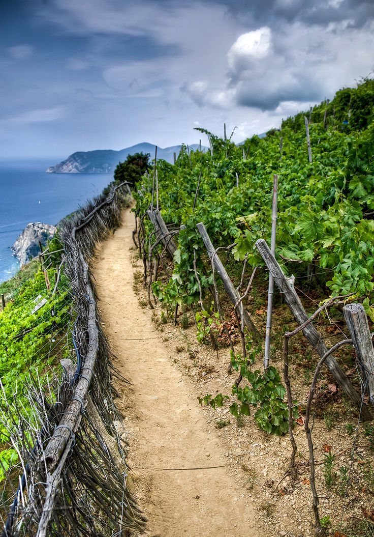 I've walked this trail and would like to go back!! Hiking Cinque Terre, Italy - So beautiful!