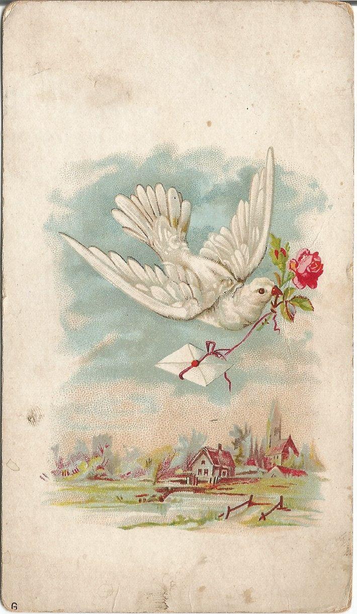 Открытки с изображением голубей