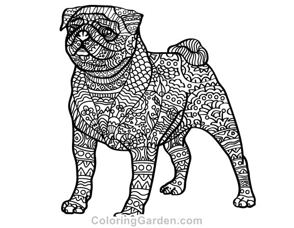 Free printable pug adult coloring page. Download it in PDF format at http://coloringgarden.com/download/pug-coloring-page/