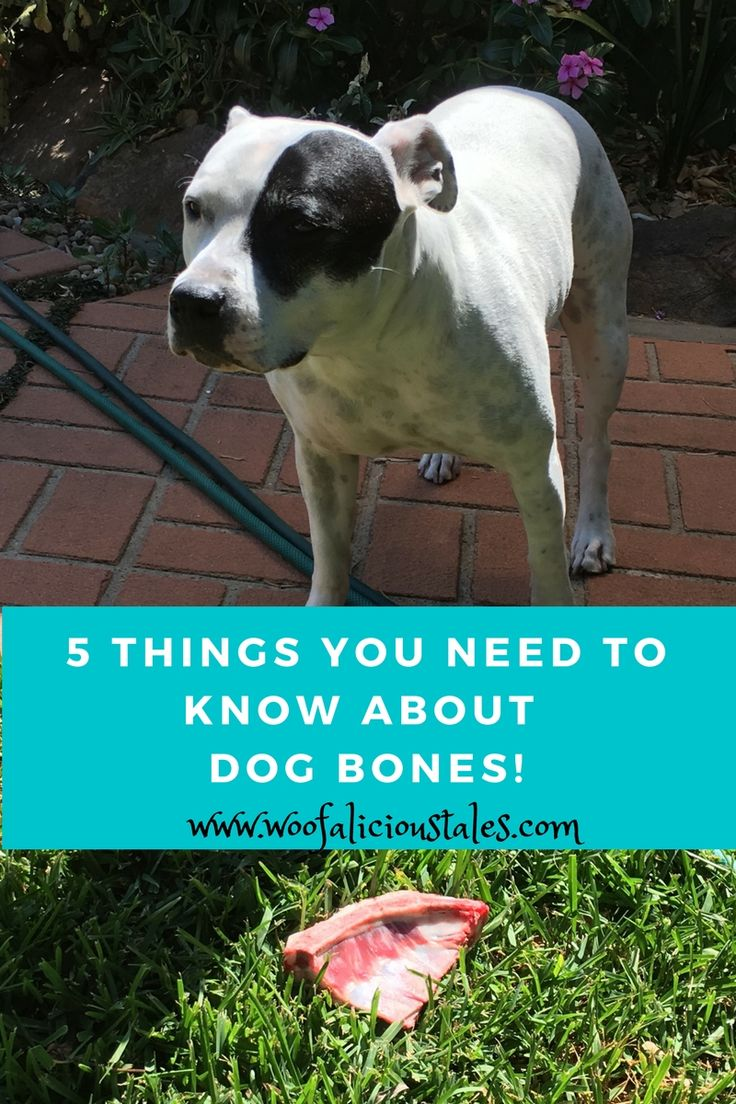 Are you undecided about whether or not to feed your dog bones?? Check out these 5 things you need to know about dog bones!