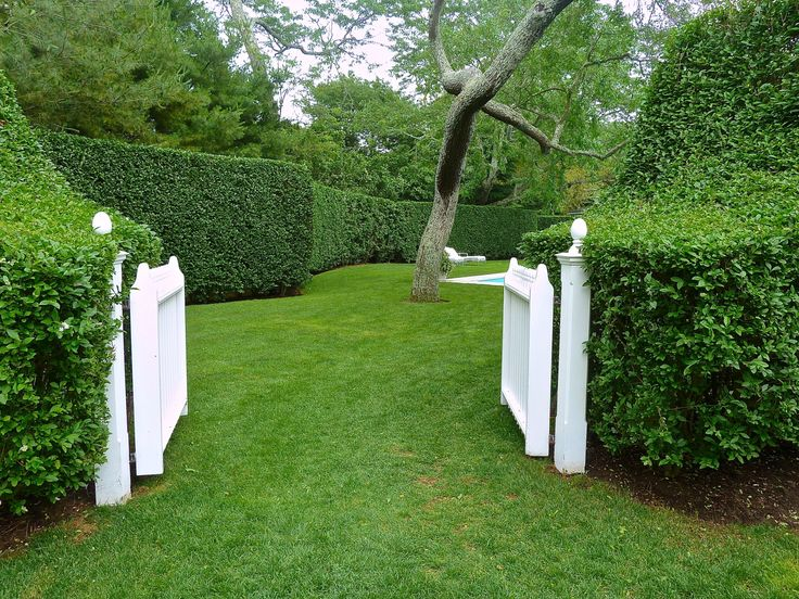 Hedges and white gate