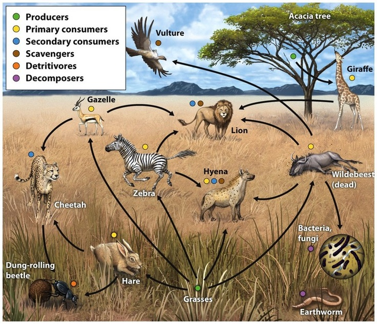 Desert Decomposers List Food webs are m...