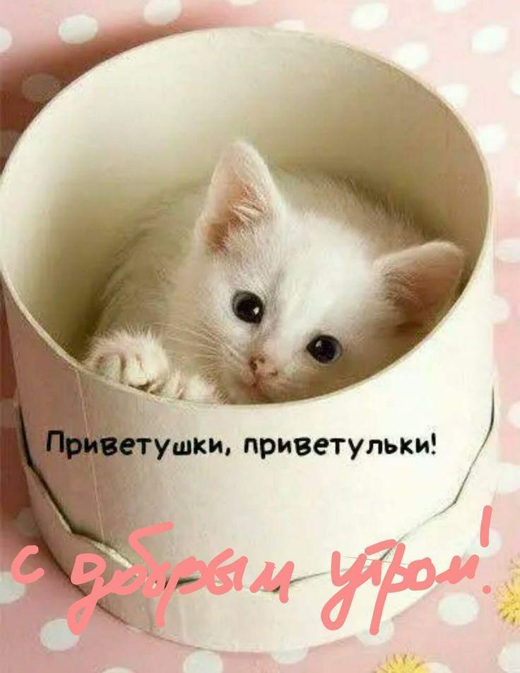 большинство, няшные картинки с котиками доброе утро этой замечательной ноте