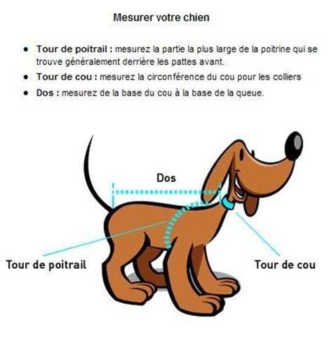 Prendre les mesures de son chien ou de son chat.