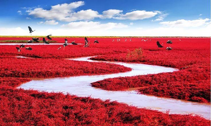La playa roja, China  Esa increíble playa roja se encuentra ubicada en la ciudad de Panjin en china, su extraña apariencia se debe a un tipo de alga que crece en su suelo, su color se empieza a notar en primavera y el resto del año se mantiene verde