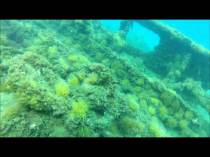 Submarinismo en el Barco Correo Delfín http://alquilercochesmalaga.soloibiza.com/submarinismo-barco-correo-delfin/ #málaga