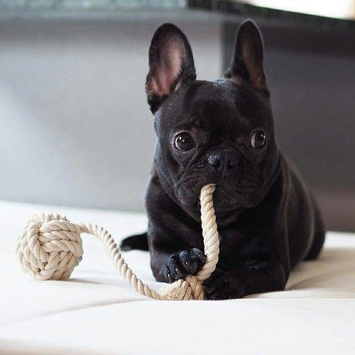 #petz #dog #собака #домашнийпитомец #домашниеживотные #домашниелюбимцы #продомашнихживотных