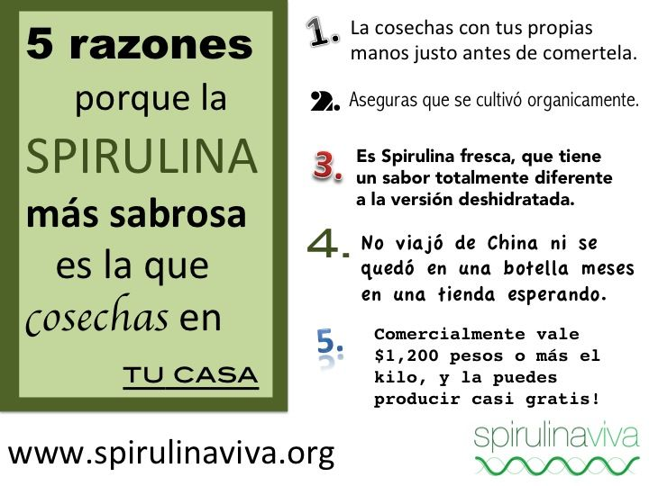 5 reasons the best spirulina is the spirulina you harvest yourself