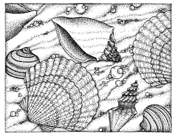 Sea Shell Coloring Page Inkspired Musings Comments Seashells And Books