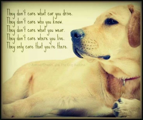 Quotes About Pet Dogs | Inspiring Quotes About Dogs – Aside From Being A Loyal Companion ...