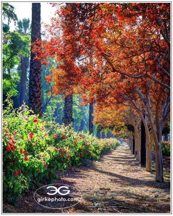 Victoria Ave, Riverside, California, .