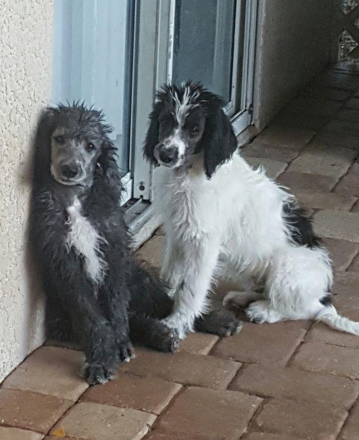 Puppies For Sale Near Me Nova Scotia Canada