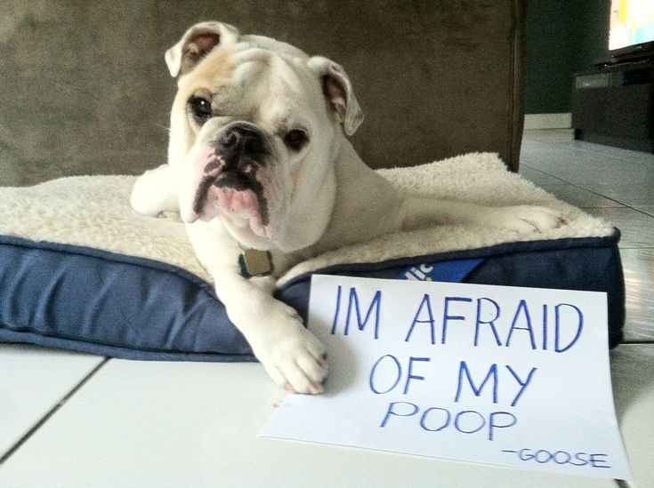 http://www.dogshaming.com/2012/11/the-goose/#photo-45