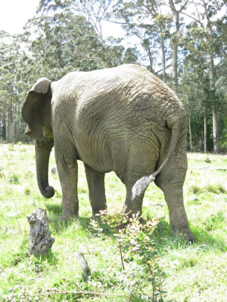 "Close-up of an elephant photographed at the Knysna Elephant Park, where they offer a ""Be Touched by an Elephant Experience."""