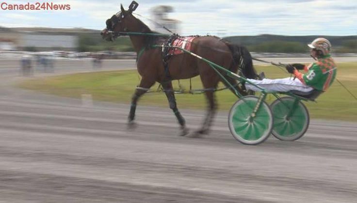 Despite uncertain future, Saint John hosts big harness racing program