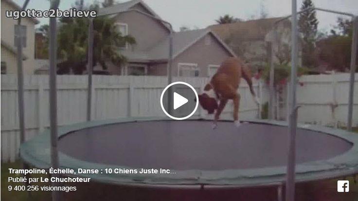 Trampoline, Échelle, Danse : 10 Chiens Juste Incroyables ► Épisode 1 - Le premier monte à l'échelle, le cinquième fait du trampoline, le huitième dance! Entre temps certains se prennent des roustes mémorables par un autre chat. Le chien qui se fait pousser dans la piscine est juste mortel. Ne rate pas aussi le chat qui fait tomber la télé sur son maître ici : http://www.le-chuchoteur.fr/incontournable-10-chats-qui-vont-vous-faire-pisser-de-rire-episode-1/  -