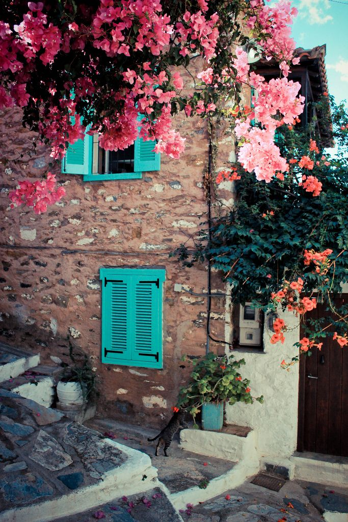 Colourful bougainvillea and orange trumpet vine - the colours of the Greek summer - tumble over old stone walls in Skopelos, Sporades Islands