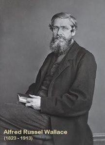 Alfred Russel Wallace, dalam pembahasan Teori Evolusi Darwin