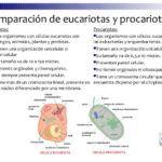 Cuadros comparativos entre célula procariota y eucariota